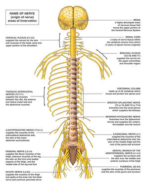 Anatomy of the Nervous System