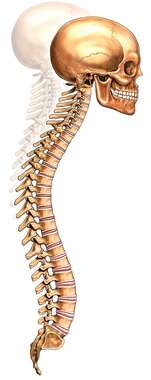 Kyphosis (Hunchback) of the Spine