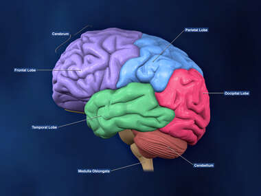 Left Lateral view of the Brain ( color coded lobes and labels)