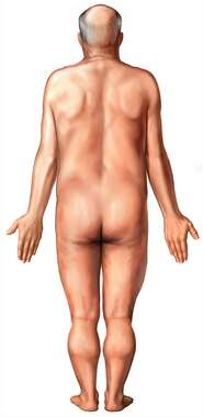 Figure of Elderly Male: Posterior View