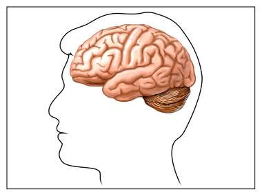 Brain: Lateral View