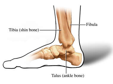 Medial (Side) View of Ankle