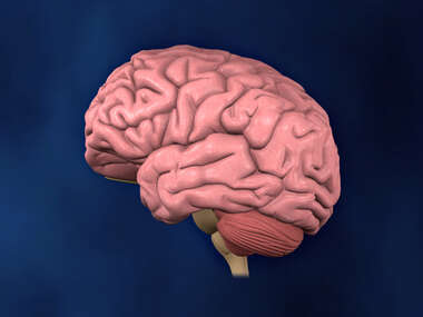 Left Lateral view of Brain