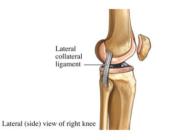 Lateral Knee Ligaments