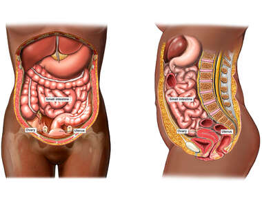Female Abdominal Anatomy