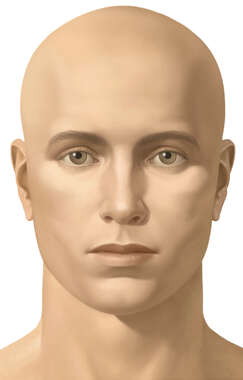Anterior Face, Male, No Hair