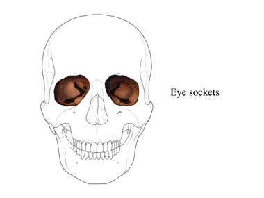 Eye Sockets