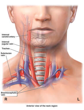 Vasculature of the Neck