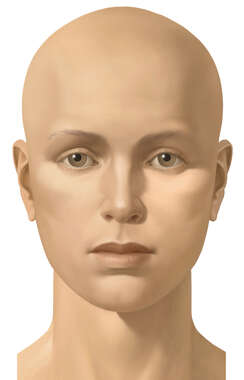 Anterior Face, Female, No Hair