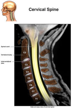 Cervical Spine X-ray Interpretation