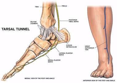 Nerve Supply of the Medial Foot