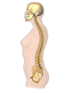 Female Figure with Spinal Cord