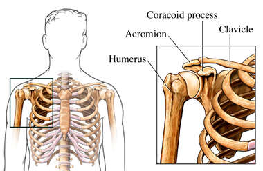 Anatomy of Shoulder Bones
