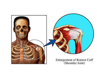 Rotator Cuff Normal Anatomy