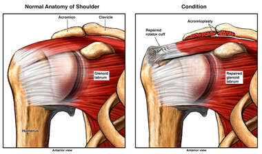 Anatomy of Shoulder