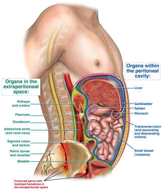 Organs of Extraperitoneal and Peritoneal Spaces