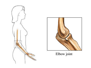 Normal Anatomy of the Elbow