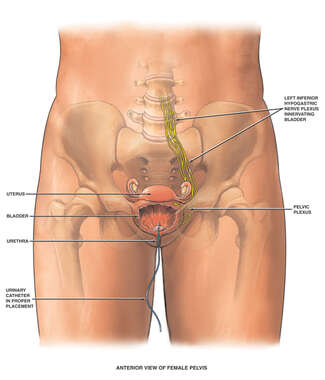 Catheter Insertion into Urinary Bladder